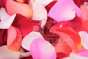 wpid-idealnye_kontury_lica_s_pomoschyu-1024x682